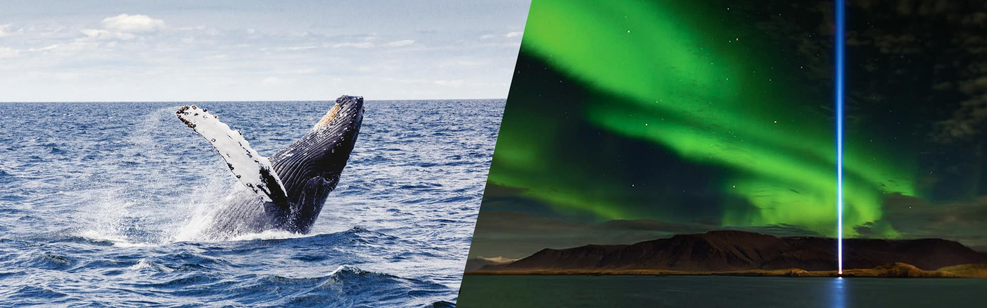 Northern Lights & Whale Combo Cruise