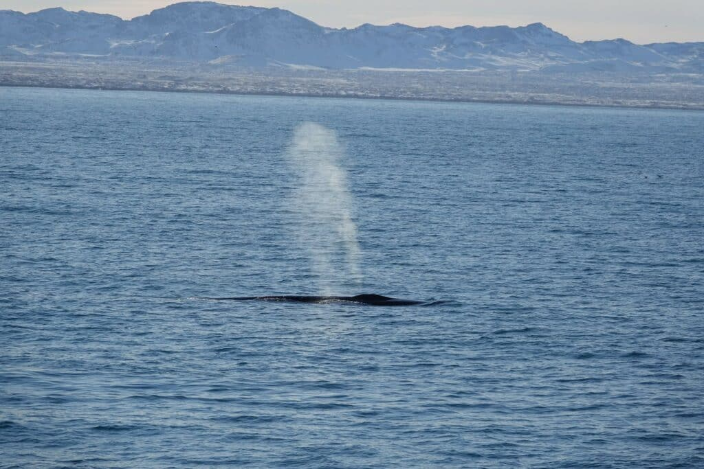 whale guides get to see amazing things like this fin whale