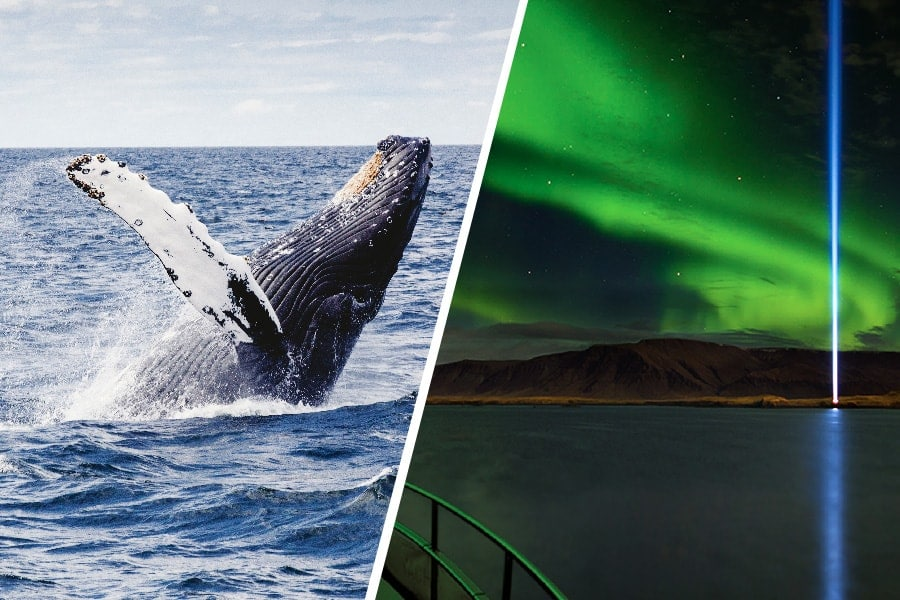 combo whale watching and northern lights reykjavik iceland