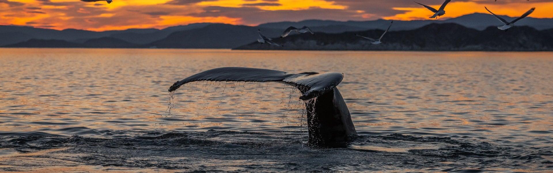 Whale Watching – Downtown Reykjavík