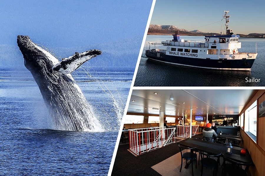 Whale watching - Downtown Reykjavík