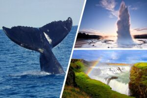 whale watching and golden circle tour ring road