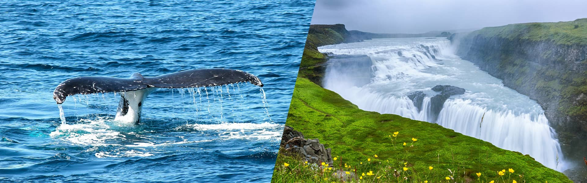 Whales & Golden Circle afternoon