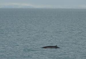 best whale watching in Iceland, reykjavik iceland
