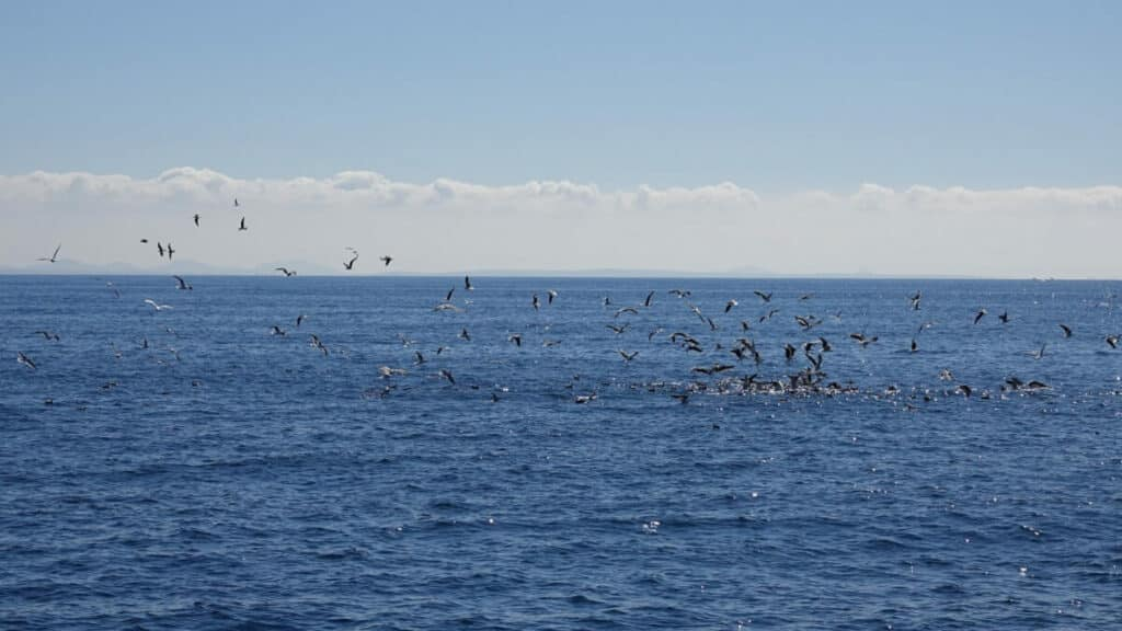 spot a whale with sea birds