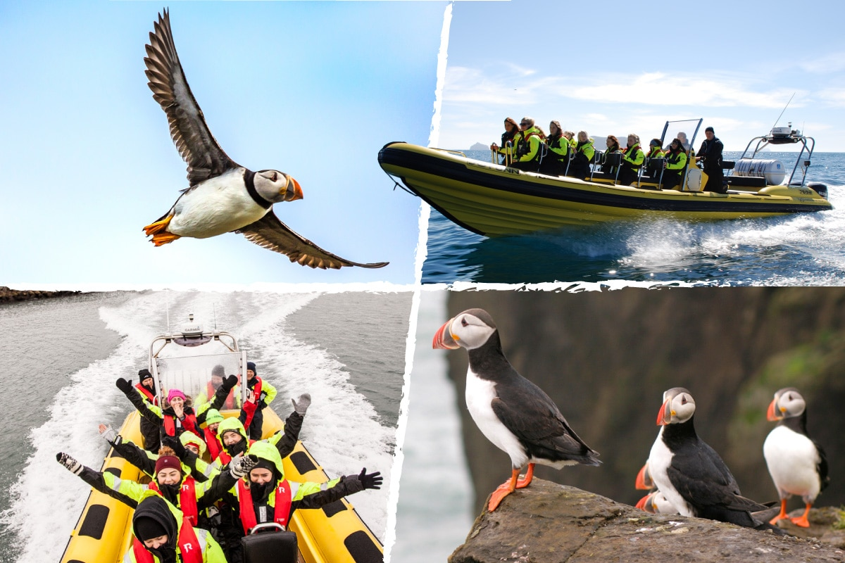 lundaskodun - puffin tour on a speed boat in Reykjavik, Iceland. A split image combining people and puffins and speedboats.
